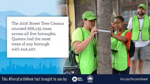Street Tree Census